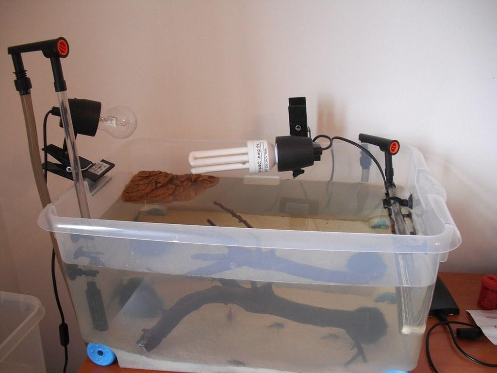 Terracquario litraggio netto 30 litri for Terracquario per tartarughe