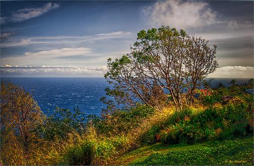 Image of View on Big Island, Hawaii