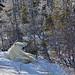 Polar Bear Scenic