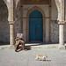 Une chat marocain