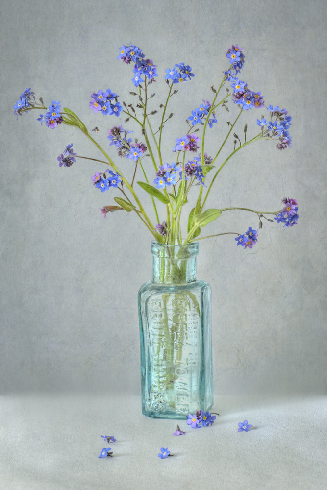 Photograph Spring Blues by Jacky Parker