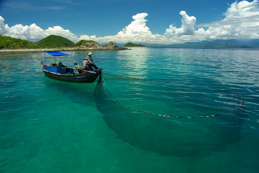 Purse seine fishermen fish for squid and cuttlefish on the for Purse seine fishing