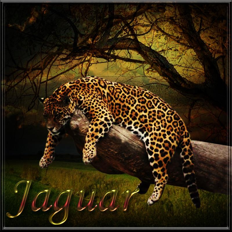 Animal Alphabet Jaguar Coloring Pages Printable