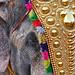The Elephant King!