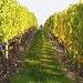 Quailhurst Vineyard Estate_MG_7016