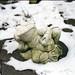 Sneeuwkikker