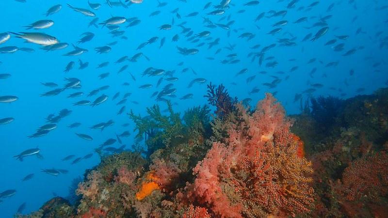 八斗子潮境公園,海裡一片熱鬧。圖片來源:林祐平。