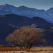 Elevation Extremes in the Eastern Sierra Nevada (Lone Pine, CA)