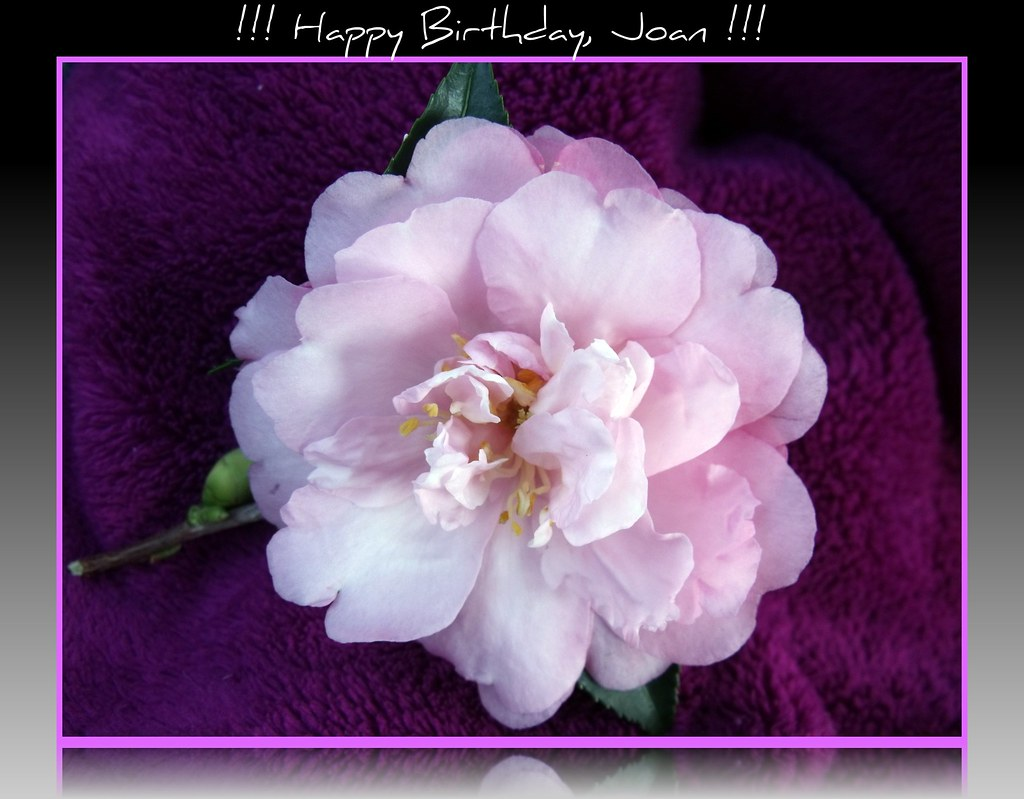 Happy Birthday Joan Happy Birthday To My Sweet Mother