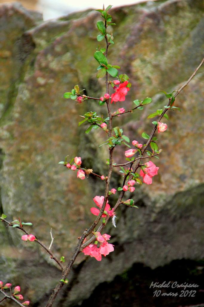 L 39 veil jardin japonais nantes jardin japonais de l for Jardin japonais nantes