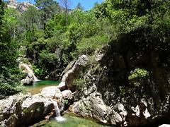 Remontée du Carciara : les vasques-cascades avant la cascade de la Frassiccia