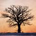Tree on the Farm III