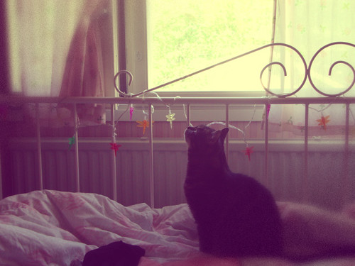 catbythewindow | by lumiannaa