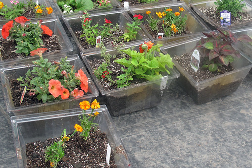 Container Gardening | by Indiana Public Media