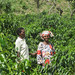 Women Farmers With Their Coffee Trees