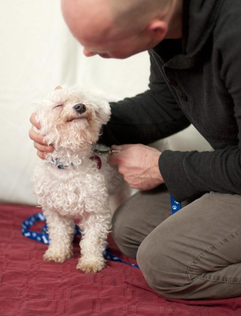 Faithful Companions Dog Rescue Albany Ny