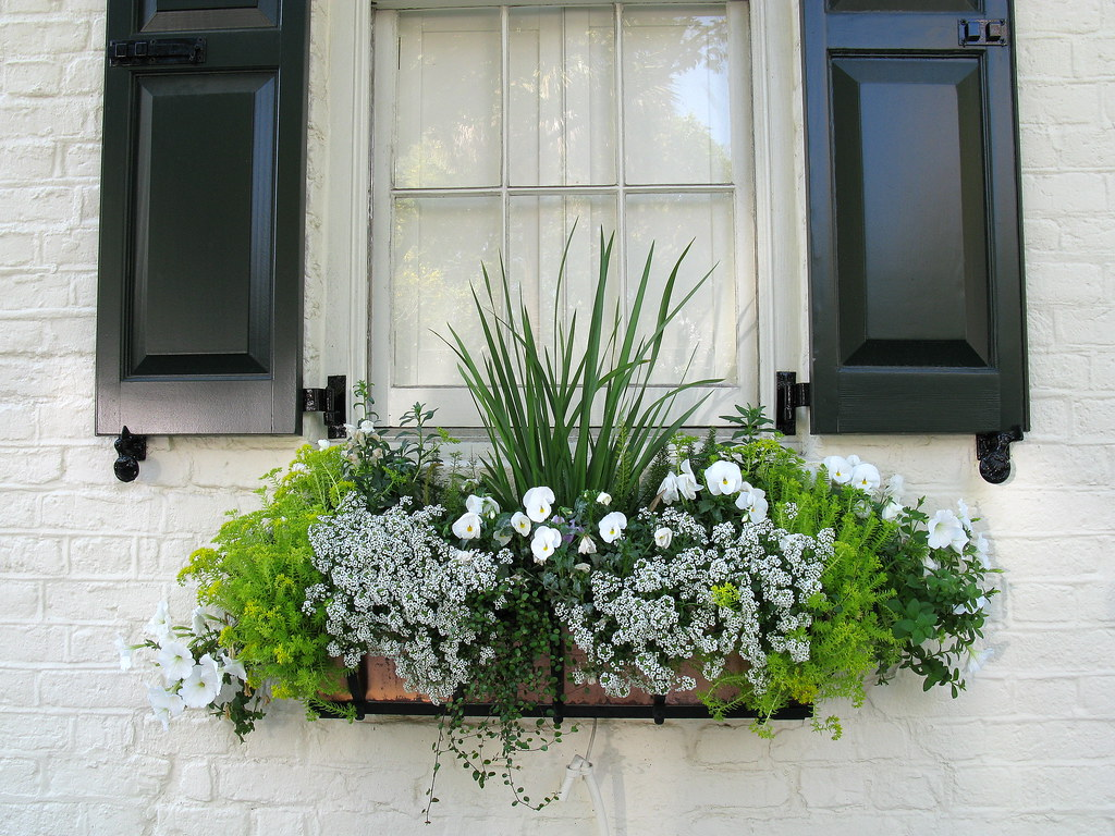 window box and black shutters 3 charleston sc spencer means flickr. Black Bedroom Furniture Sets. Home Design Ideas