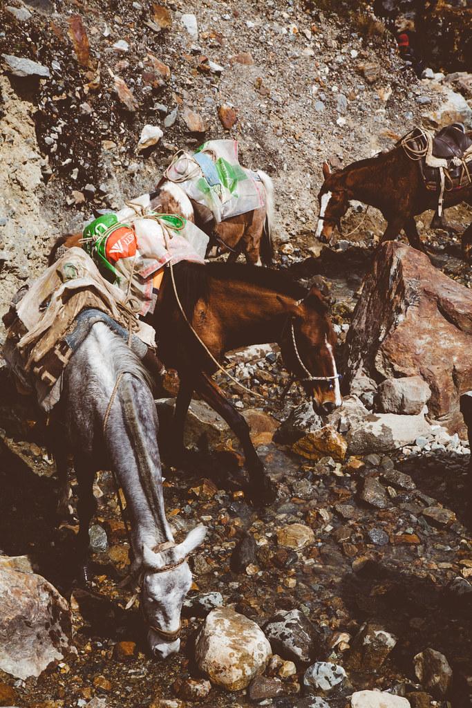 Horses hydrating