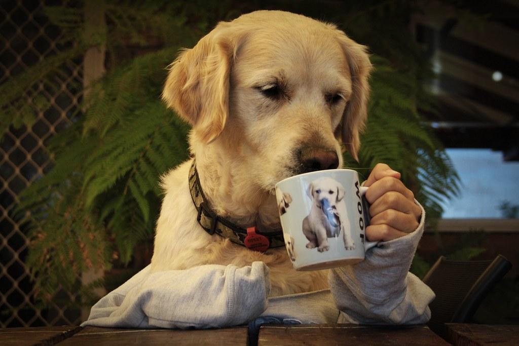 Mmmm, coffee break.   Taylah Stiles   Flickr