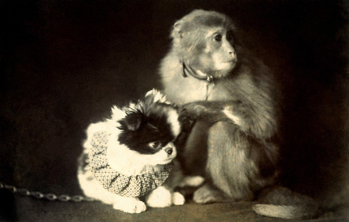 Chin Dog and Monkey 1915 | by Blue Ruin 1
