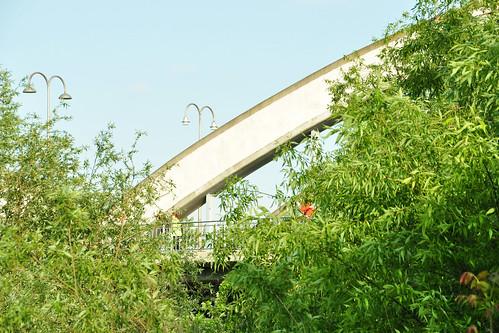 """Idyllischer Neckar-Spaziergang in Seckenheim. Rund um die Neckarbrücke nach Ilvesheim wächst rechts und links des Fußgängerweges die Große Klette (Arctium lappa). Von dieser Wildform wird in Japan eine Zuchtforn kultiviert und als """"Gemüseklette"""" ähnlich wie Schwarzwurzeln verwendet. Foto: Brigitte Stolle Mai 2016"""