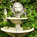 Lion Fountain with Creeping Fig