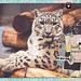 2015-1010-zoo2-SnowLeopard