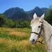 white horse...