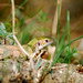 DSC_2064  Little Lizard
