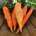papier mache carrot pencils  |  http://www.smallhandsbigart.com