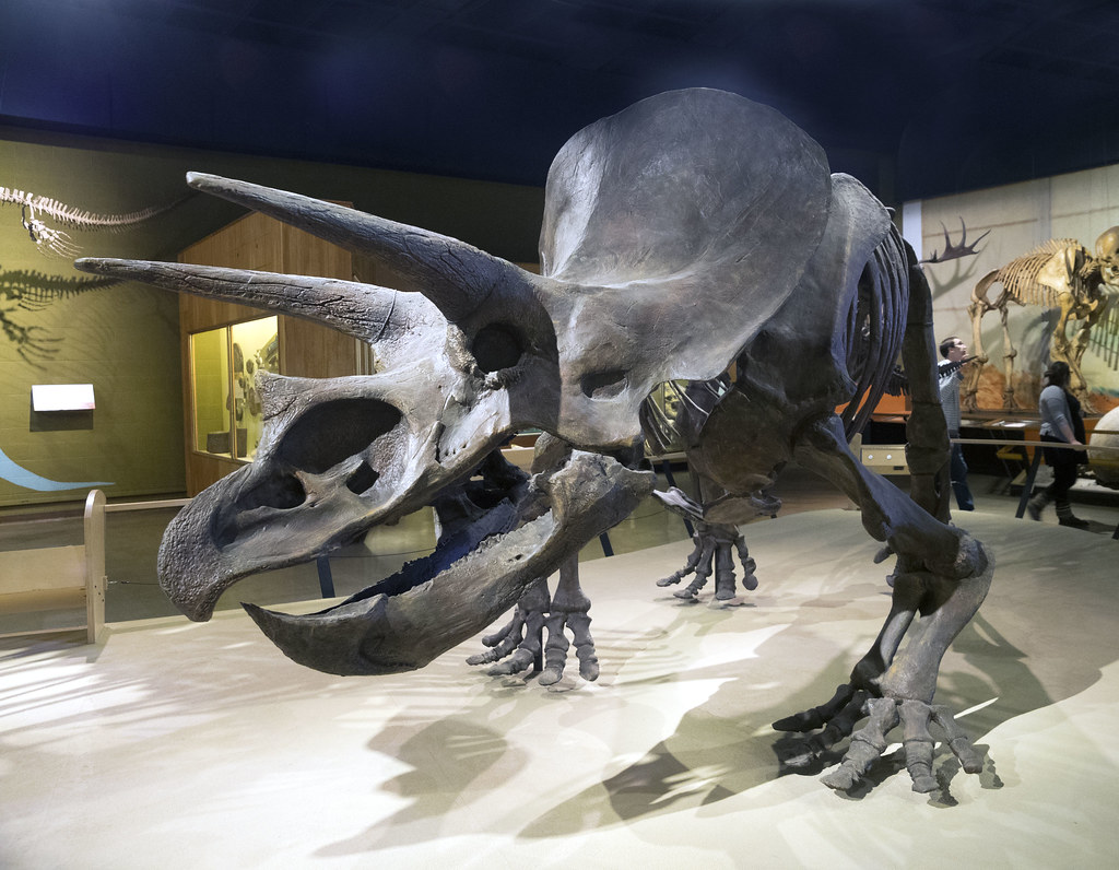 Jobs At Cleveland Museum Of Natural History