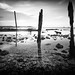Ruins of an old jetty