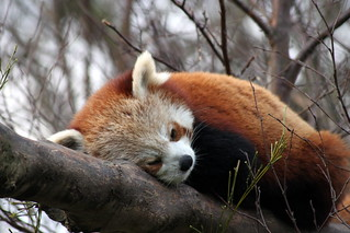 Firefox is not Responding | by Damien Ryan