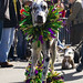 Barkus Dog Parade