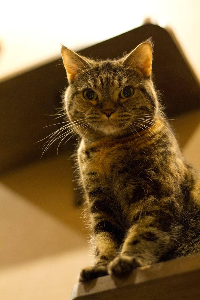 Cat Cafe Kyariko