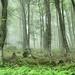 Forest on Stara planina mountain near Babin zub