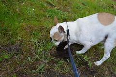 Beaker digging