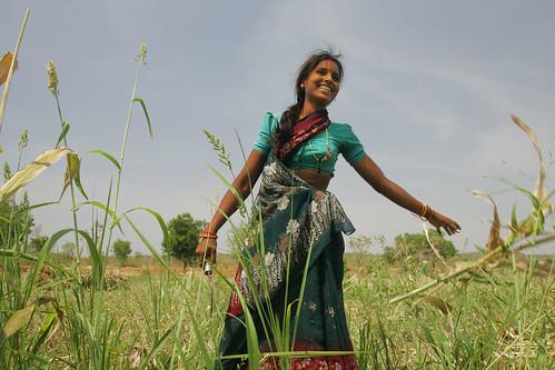 What Is Ethanol >> Women help harvest sorghum for feed and food in Burgaiah Thanda Village, Andhra Pradesh, India ...