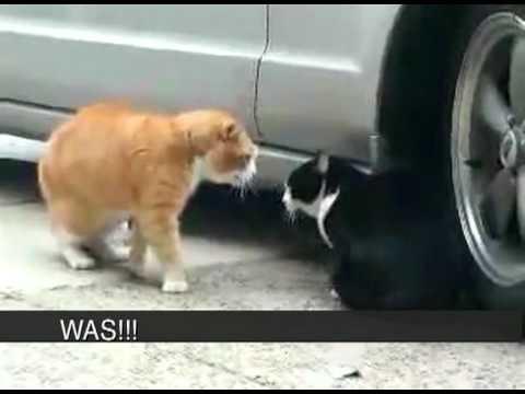Cat Betrayed His Girlfriend! Sex! Heat! Rage! Foul languag… - Flickr