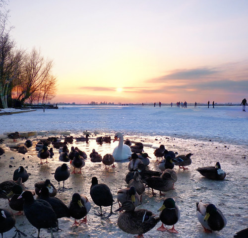 The last pool attracts numerous birds in Zuiderwoude | by B℮n