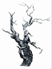 A Gnarled Old Tree - Ink drawing