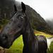 Dark Horse of Paliku