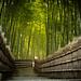 stairway between life and death (Adashino-nenbutu-ji temple, Kyoto)