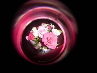 Fisheye-Flowers-Focused | by Ross Jukes
