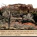 The Book of Disquietude pt 2: Portugese via Arizona Wilderness