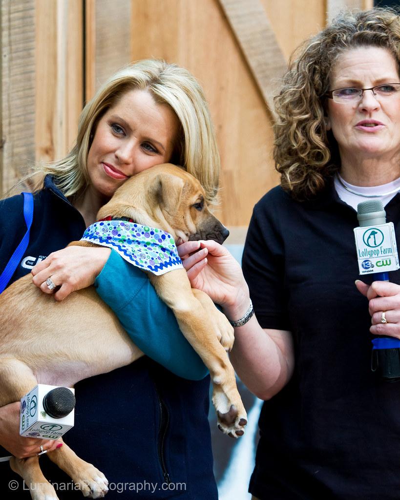 Humane Society Of Missouri Adoptable Dogs