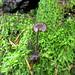 Moss and Earpick Fungus