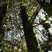 Trees - La Cumbrecita