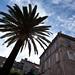 Palm in Corsica