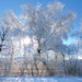 The beauty of a weeping willow tree in the winter